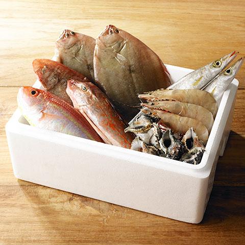 東京カレンダー限定 漁師の産直 季節の鮮魚5000